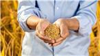 农产品营销